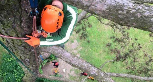 praca-na-drzewach-kursy-drzewa